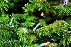 Φω'τα στο χριστουγεννιάτικο δέντρο Στοκ Εικόνες