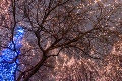 Φω'τα Χριστουγέννων σε ένα δέντρο με το υπόβαθρο του γκρίζου ουρανού Στοκ Φωτογραφία