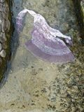 Φόρεμα μεταξιού χορού στο κρύο νερό Στοκ εικόνα με δικαίωμα ελεύθερης χρήσης