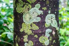 Φόρμα σε ένα δέντρο Στοκ Φωτογραφίες