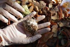 φόρμα χεριών στοκ φωτογραφία με δικαίωμα ελεύθερης χρήσης