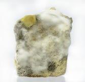 Φόρμα ψωμιού Στοκ εικόνα με δικαίωμα ελεύθερης χρήσης