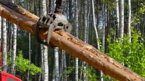 Φόρτωση ξυλείας, κούτσουρα φόρτωσης σε ένα φορτηγό, επεξεργασία ξυλείας, αποδάσωση, φόρτωση ξυλείας με ένα νύχι απόθεμα βίντεο