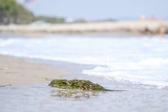 Φύκια στην παραλία 2 στοκ φωτογραφία με δικαίωμα ελεύθερης χρήσης