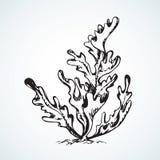 φύκι ανασκόπηση που σύρει το floral διάνυσμα χλόης διανυσματική απεικόνιση