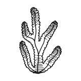 φύκι διανυσματικό σχέδιο χεριών σκίτσων που απομονώνεται διανυσματική απεικόνιση