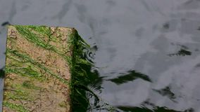 Φύκι που ταλαντεύεται εμπρός στις παλίρροιες δίπλα σε έναν φραγμό τσιμέντου απόθεμα βίντεο