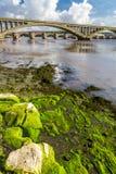 Φύκι σε έναν βράχο κάτω από τη γέφυρα Στοκ Φωτογραφία