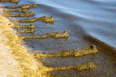 Φύκι στην παραλία Στοκ Φωτογραφίες