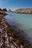 Φύκι στους βράχους Στοκ εικόνες με δικαίωμα ελεύθερης χρήσης