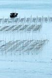 Φύκι fram Στοκ Φωτογραφία