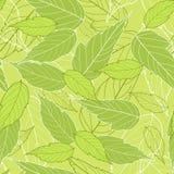 φύλλα άνευ ραφής Στοκ Φωτογραφίες