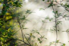 Φύλλα άνοιξη, misty πρωί στοκ φωτογραφία με δικαίωμα ελεύθερης χρήσης