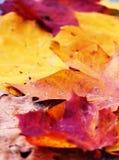 φύλλα ανασκόπησης φθινοπώρου Στοκ φωτογραφία με δικαίωμα ελεύθερης χρήσης