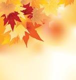 φύλλα ανασκόπησης φθινοπώ& Στοκ εικόνα με δικαίωμα ελεύθερης χρήσης