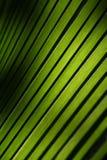 φύλλα ανασκόπησης Στοκ Εικόνα