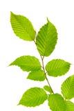 φύλλα ανασκόπησης στοκ εικόνες
