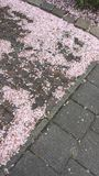 Φύλλα ανθών στο έδαφος στοκ εικόνες με δικαίωμα ελεύθερης χρήσης