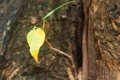 Φύλλα από τα δέντρα. Στοκ Εικόνες