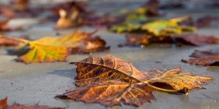 Φύλλα αφορημένος ένα πεζοδρόμιο το φθινόπωρο στοκ εικόνες με δικαίωμα ελεύθερης χρήσης