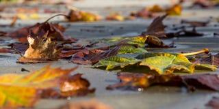 Φύλλα αφορημένος ένα πεζοδρόμιο το φθινόπωρο στοκ φωτογραφία με δικαίωμα ελεύθερης χρήσης
