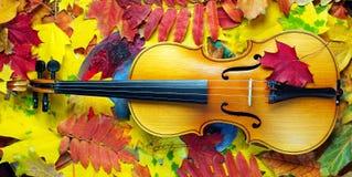 Φύλλα βιολιών και φθινοπώρου στοκ φωτογραφίες με δικαίωμα ελεύθερης χρήσης