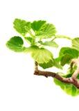 φύλλα γερανιών Στοκ φωτογραφία με δικαίωμα ελεύθερης χρήσης