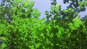 Φύλλα δέντρων Η ομορφιά στη φύση στοκ εικόνα