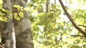 Φύλλα δέντρων σε ένα δάσος απόθεμα βίντεο
