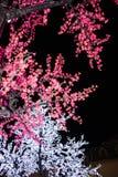 Φύλλα δέντρων του FIR με τις καλά λεπτομερείς πτώσεις νερού στοκ φωτογραφίες