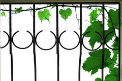 φύλλα δικτυωτού πλέγματ&omicro Στοκ Εικόνα