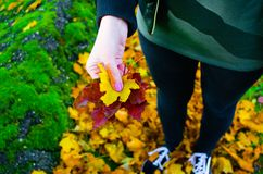 Φύλλα εκμετάλλευσης γυναικών, φθινόπωρο στοκ εικόνες με δικαίωμα ελεύθερης χρήσης