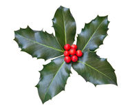 φύλλα ελαιόπρινου μούρων Στοκ φωτογραφία με δικαίωμα ελεύθερης χρήσης