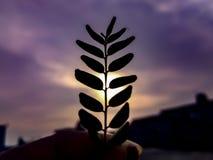 Φύλλα κάρρυ στοκ φωτογραφίες με δικαίωμα ελεύθερης χρήσης