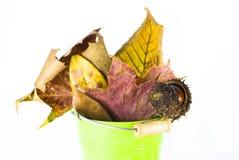 φύλλα κάστανων φθινοπώρο&upsilo Στοκ φωτογραφίες με δικαίωμα ελεύθερης χρήσης