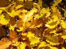 φύλλα κίτρινα Στοκ φωτογραφία με δικαίωμα ελεύθερης χρήσης