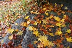 φύλλα κίτρινα Στοκ εικόνα με δικαίωμα ελεύθερης χρήσης