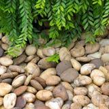 Φύλλα και αμμοχάλικο στοκ εικόνα με δικαίωμα ελεύθερης χρήσης