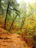 Φύλλα και βελόνες πεύκων στοκ εικόνες