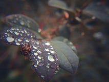 Φύλλα και δροσιά στοκ εικόνα με δικαίωμα ελεύθερης χρήσης