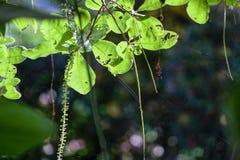 Φύλλα και ιστοί αράχνης Στοκ Φωτογραφίες