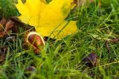 φύλλα και κάστανα φθινοπώρου στην πράσινη χλόη Στοκ φωτογραφία με δικαίωμα ελεύθερης χρήσης