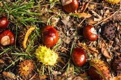 φύλλα και κάστανα φθινοπώρου στο έδαφος Στοκ εικόνες με δικαίωμα ελεύθερης χρήσης