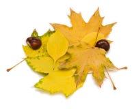 Φύλλα και κάστανα φθινοπώρου Στοκ φωτογραφία με δικαίωμα ελεύθερης χρήσης