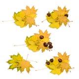 Φύλλα και κάστανα φθινοπώρου Στοκ εικόνες με δικαίωμα ελεύθερης χρήσης