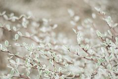 Φύλλα και κλάδοι λίγων φυτών στο θερμό τόνο, υπόβαθρο φύσης Στοκ εικόνα με δικαίωμα ελεύθερης χρήσης