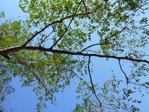 Φύλλα και κλάδοι Στοκ Φωτογραφίες