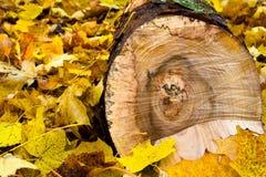 Φύλλα και κούτσουρο Στοκ Φωτογραφίες