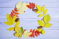 Φύλλα και κώνοι φθινοπώρου 'στεφανιών ÑˆÑ στοκ φωτογραφία με δικαίωμα ελεύθερης χρήσης
