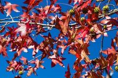 Φύλλα και λοβοί πτώσης Στοκ Φωτογραφίες